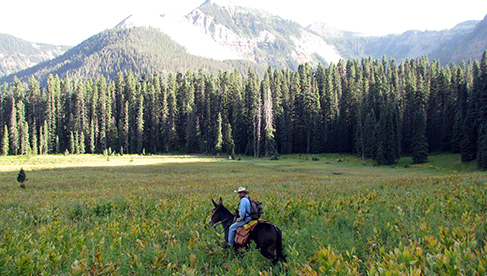 T Bar M Outfitters horseback and fishing vacations in Colorado and Utah