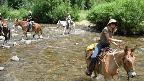 T Bar M Outfitters equestrian vacations Colorado and Utah