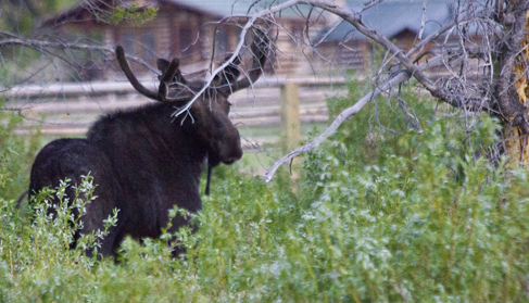 Wildlife abounds near the T Cross Ranch- Wyoming Dude Ranch