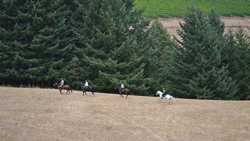 Willamette Coast Ride Oregon Horseback Holidays