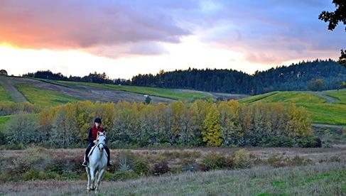 Willamette Coast Ride Oregon Beach Vineyard Horseback Riding Tours