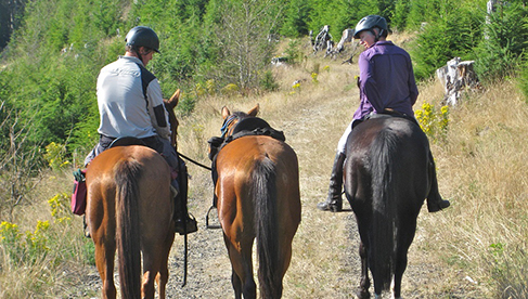 Willamette Coast Ride Oregon Equestrian Holidays