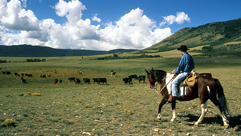 Wyoming dude ranches- Wyoming dude ranchers association