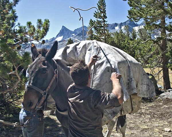 diamond hitch pack mule california