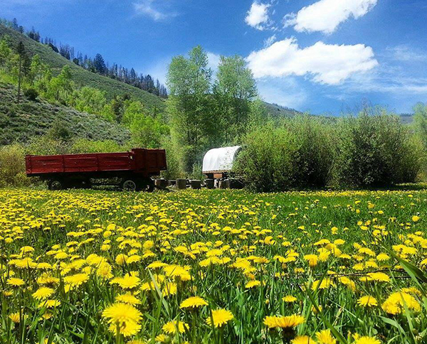 Summer in the Rockies at Drowsy Water Ranch