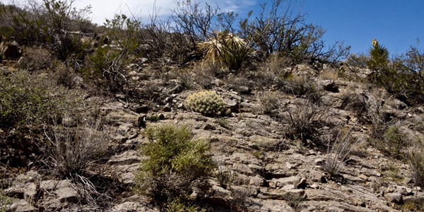 eco garden cacti new mexico