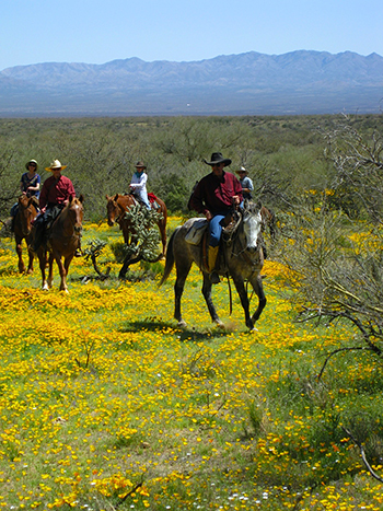 elkhorn ranch arizona trail ride