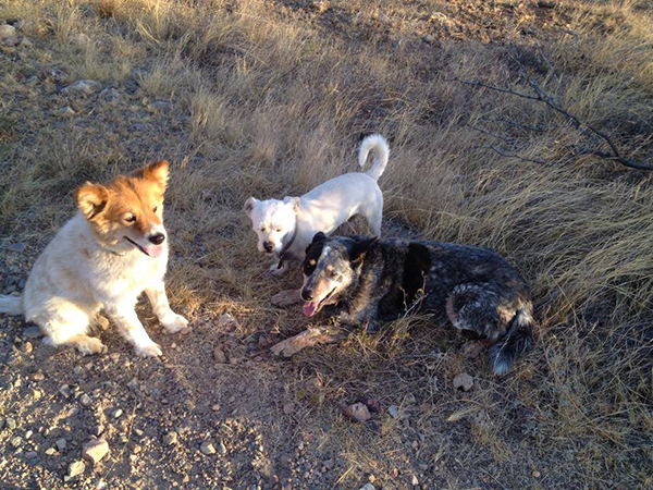 Elkhorn Ranch arizona dogs