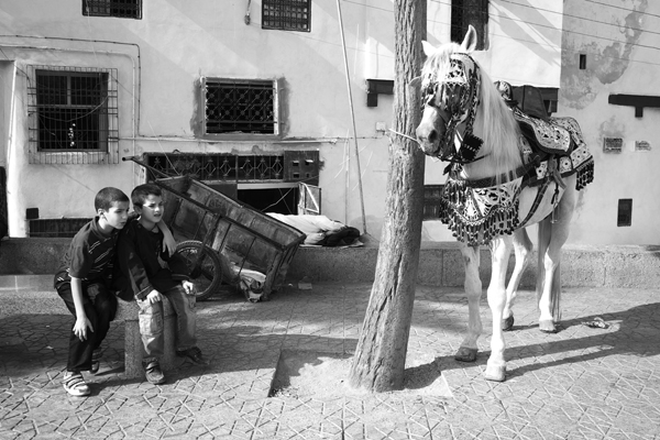 Travels on Horseback Morocco