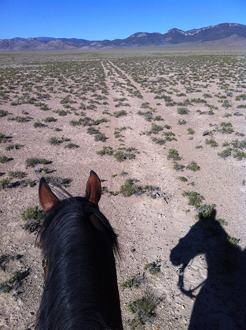 equestrian trails nevada