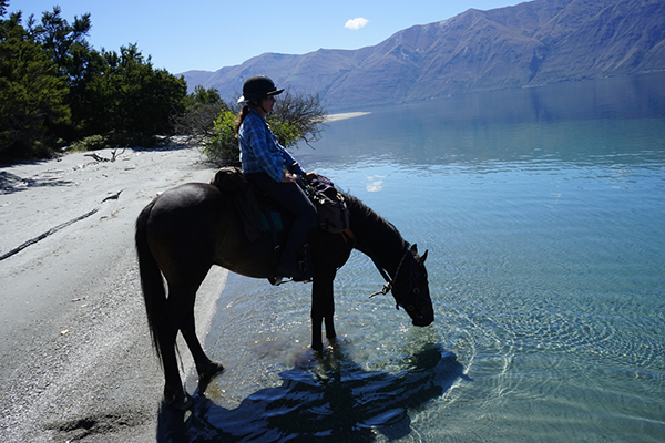 a guest horseback riding through New Zealand takes a break as her horse drinks from a stream hosted by Adventure Horse Trekking