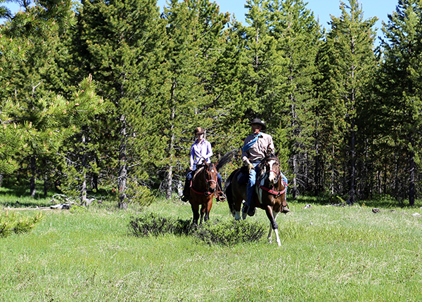 Equitrekking Medicine Bow Lodge National Forest Wyoming