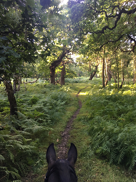 between the ears view from horseback of fairy glen in windsor great park uk