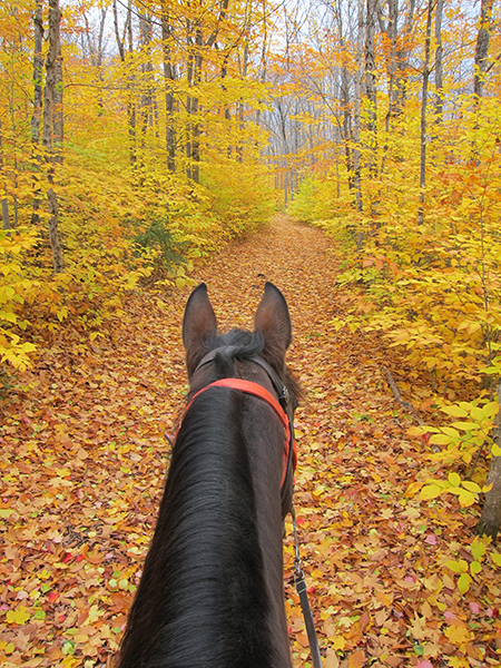 fall trail ride in northern maine