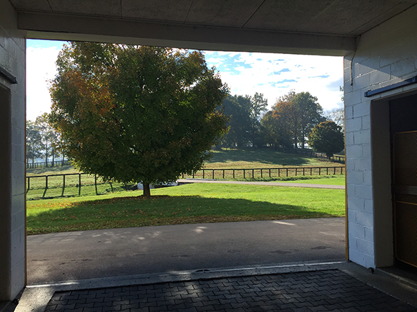 farm views claiborne farms kentucky