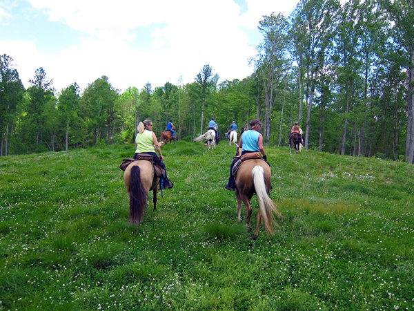 fields of clovers on horseback in West Virginia