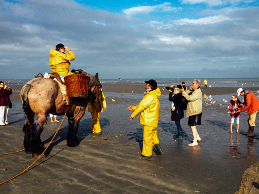 Shrimp Fishing with Horses Belgium