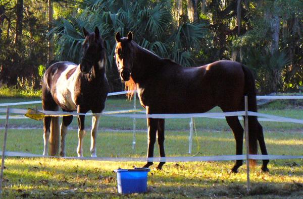 florida horse camping princess place