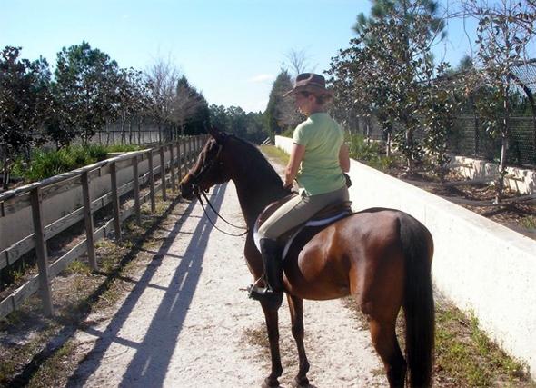 florida horse riding