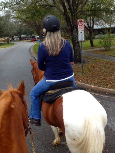 florida equestrian vacation st petersburg