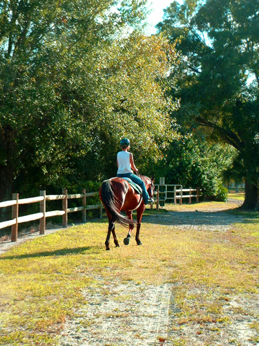 florida pinellas park st petersburg horse riding