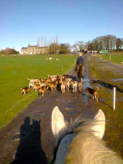 Riding Horses At Flowerhill In Ireland S Galway