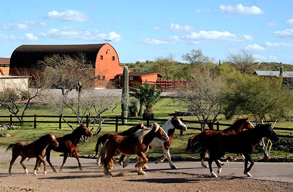 horses and barn at flying e ranch arizona