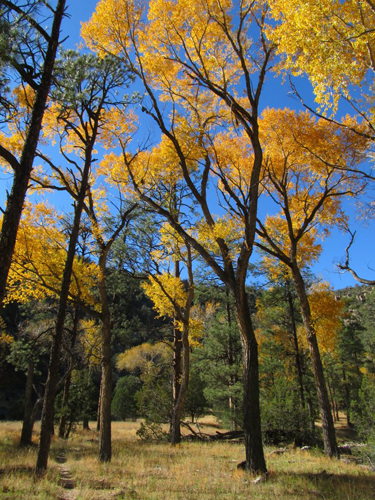 geronimo trail ranch new mexico Narrowleaf Cottonwoods