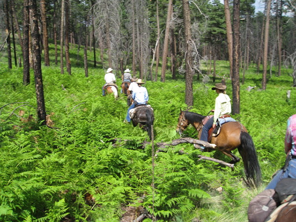 gila hot springs ranch horseback riding
