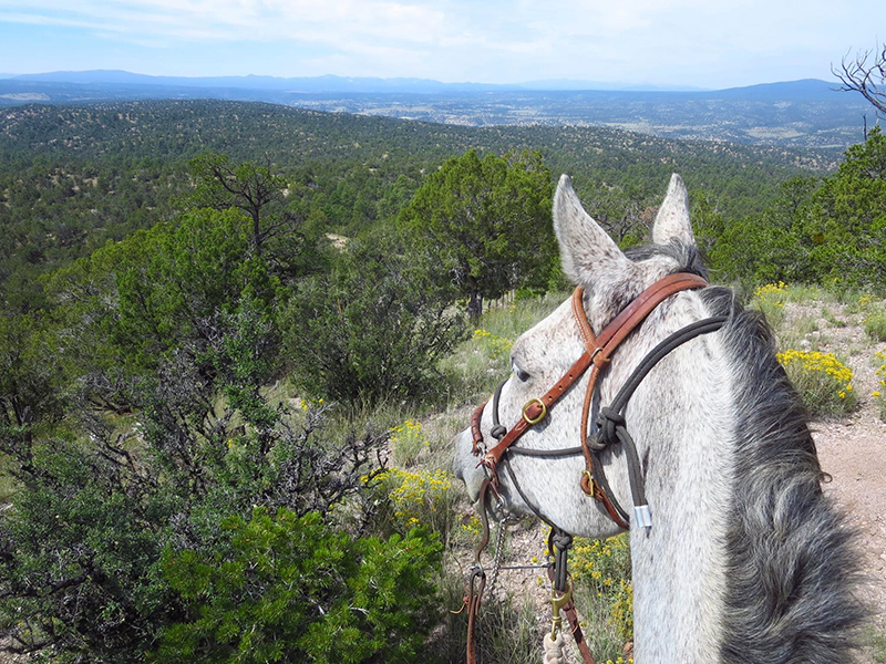 Gila national forest horseback riding