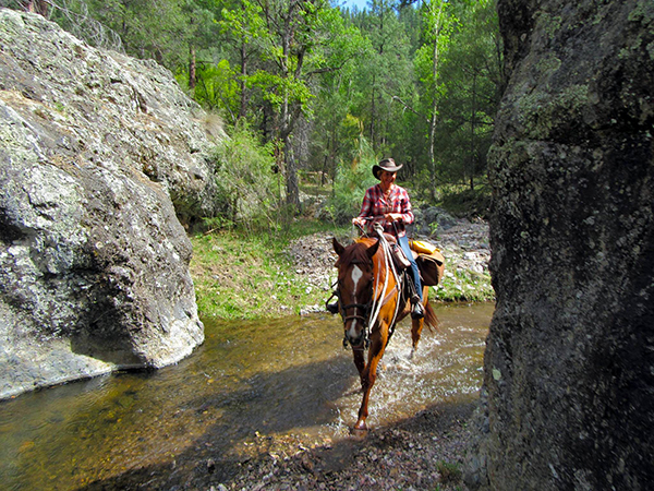 Gila National Forest Horseback Riding canyons springs