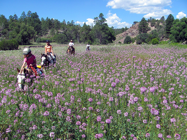 50 state trail riding project the best state parks in arkansas for gila national forest wildflowers fandeluxe Images