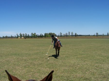 Argentina polo lessons