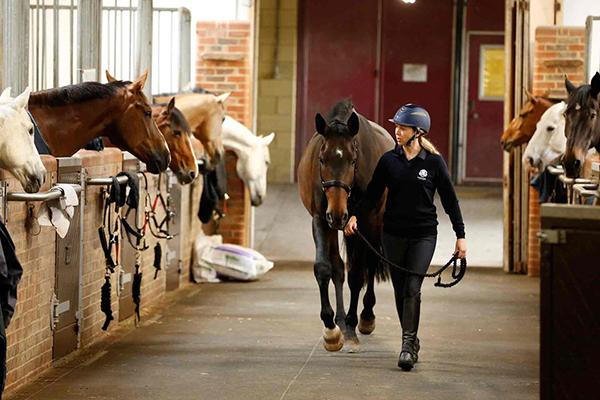 Gleneagles stables