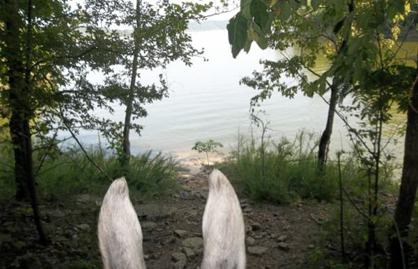 Green River horseback riding Kentucky