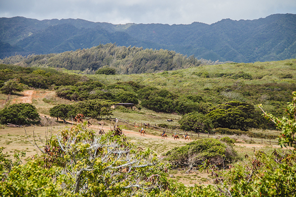 equestrians trail riding through oahu island hawaii at gunstock ranch
