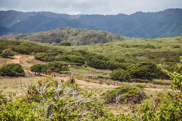 equestrians trail riding through oahu island hawaii at gunstock ranch