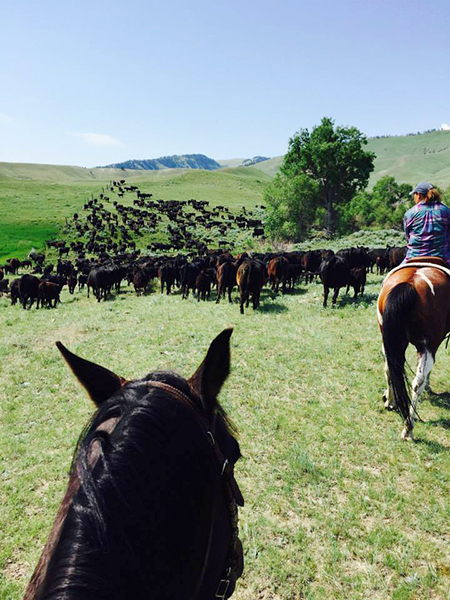 herding cattle wyld leadership