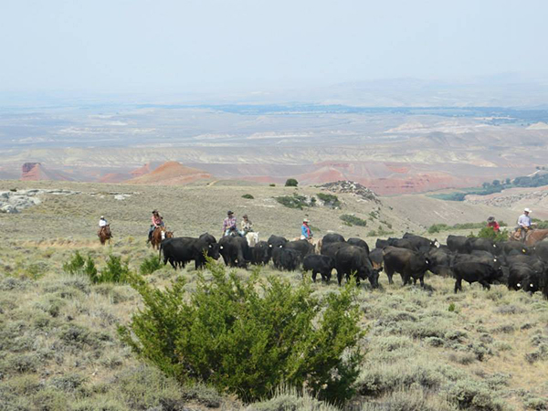 Hideout ranch cattle drives wyoming