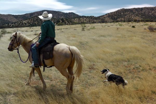 hideout ranch horseback riding
