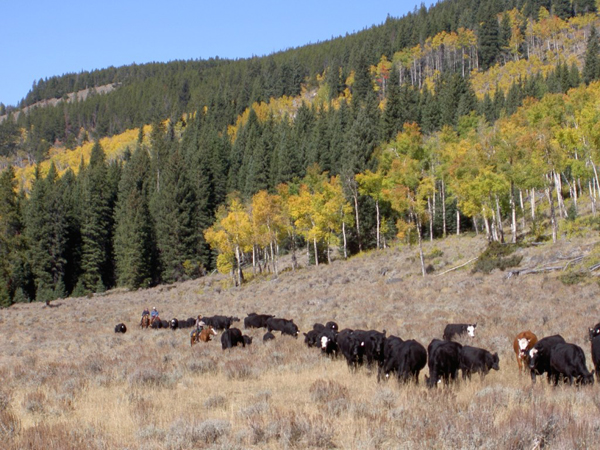 hideout ranch cattle drive wyoming