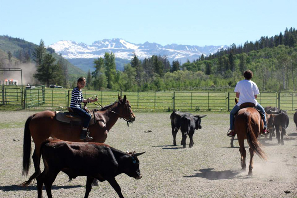 home ranch cattle work