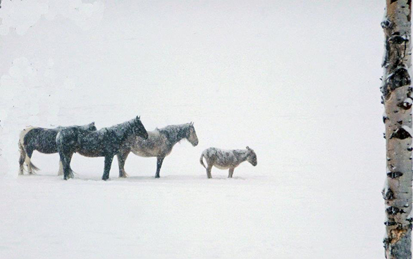 home ranch snow horses