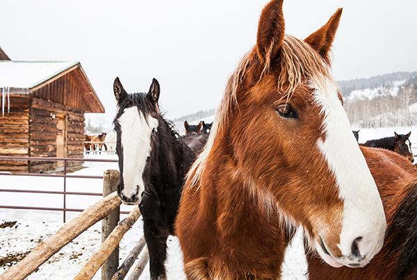 Home Ranch winter horses Colorado