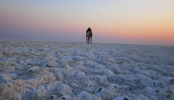 a horse runs free in Botswana