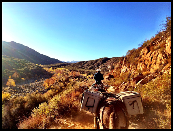 horse riding sespe trail California