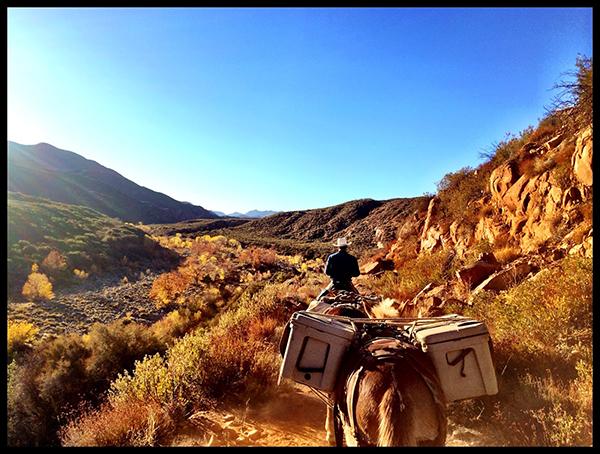 horse riding sespe trail California