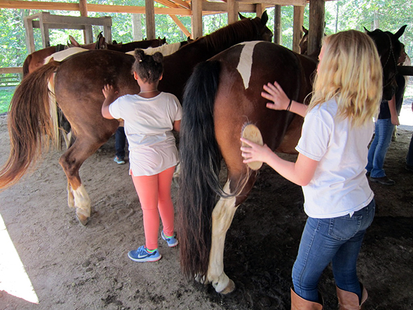 horse camp leading and grooming