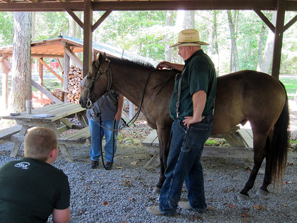 4-H Youth Camp West Virginia equestrian kids