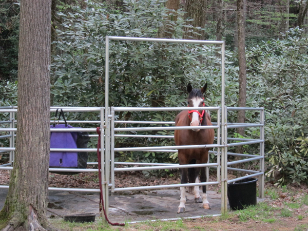 horse corral at camp creek state park and forest west virginia